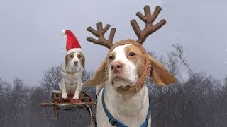 Dogs Ruin Christmas:  Cute Dog Maymo & Puppy Penny