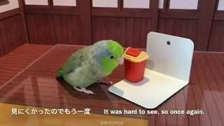 Funny parrot and cute birds compilations #101 A
