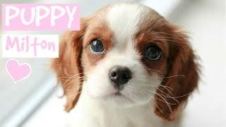 FIRST DAY WITH NEW PUPPY | Cavalier King Charles Spaniel