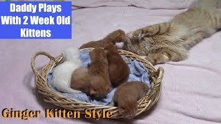 Extreme Cuteness – Daddy Wants To Play With 2 Week Old Kittens