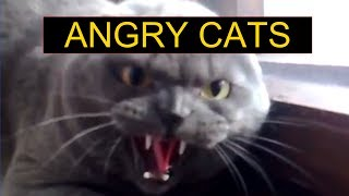 Angry Cats Compilation – Funny Cats Compilation