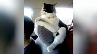 BEST HIGHLIGHTS of CATS, you will LAUGH FOR HOURS! – Funny CAT VIDEOS