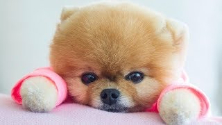 Funny Videos Of Puppies And Dogs – Cute Baby Dogs Doing Funny Things | Puppies TV