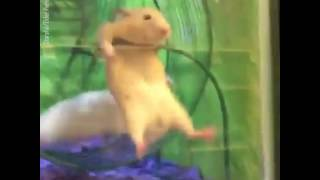 PETSMART Hamsters Stuck on Wheel funny