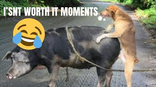 It's Worth It Sometimes Moments # – Best Funny dogs Vines -🐶🐶🐶🐶.mp4