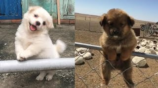 Cute Baby Dogs Compilation – Cute Puppies Doing Funny Things | Cutest Puppy Ever In The World