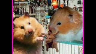 Funny Hamsters  6