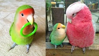 Funny Parrots Videos Compilation cute moment of the animals – Cutest Parrots #5