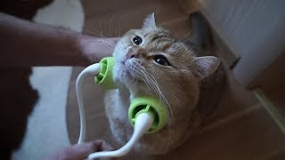 Funny And Cute Cats – Hardest Try Not To Aww Challenge 2019