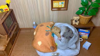 Watch this cute little hamster eating in bed! (2019 Top funny #hamster #mukbang video)