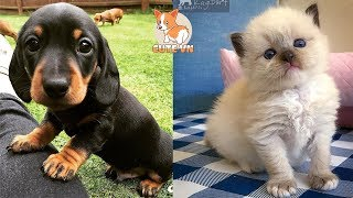 💗Aww – Cute Dog and Cat Compilation 2019💗 #2 – CuteVN