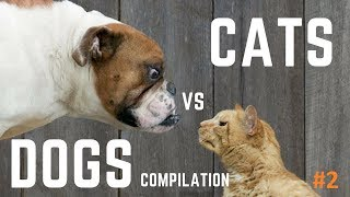 *Cute Dogs And Cats Doing Funny Things 2019 – Try Not to Laugh Challenge*