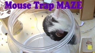 Funniest Hamsters 2019 – Hamsters In Mouse Trap Maze