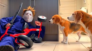Dogs vs Michael Myers Prank | Funny Dogs Louie & Marie