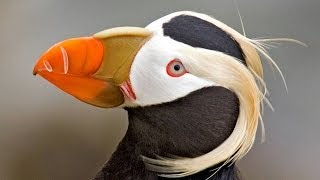 50 Most Bizarre, Weird, Funny and Interesting Birds from around the World