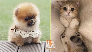 💗Aww – Funny and Cute Dog and Cat Compilation 2019💗 #16 – CuteVN