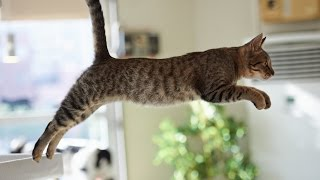 Funny Cats Jump Fail – Part 1