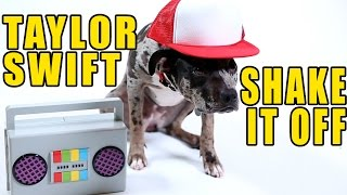 Taylor Swift – Shake It Off (Cute Dog Version)
