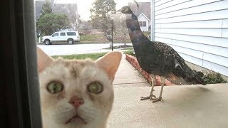 LAUGH OUT LOUD with the FUNNIEST CATS – Funny CAT compilation