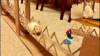 My Funny Pet Hamster walked on a long Bridge | just for fun