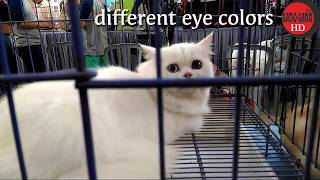 FUNNY AND CUTE CATS 2017 – HD