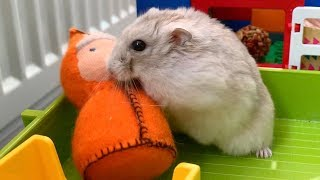 My Funny Pet Hamster in Lego Maze
