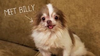 Meet Billy, Rescued From a Puppy Mill – 2013 CINE Award Winner