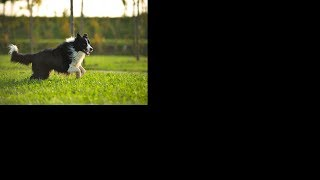 Funniest Dogs Cute – Funny Dog Compilation #27