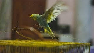 Funny Parrots And Cute Birds – Cutest Birds Compilation 2019