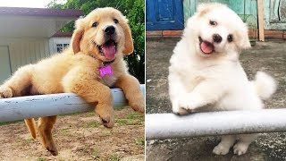 Puppies SOO Cute! Cute Puppy Videos Compilation cutest moment of the Dogs #2
