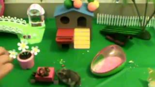 Funny hamsters video Happy Birthday Mr. Skittles  Birthday party for hamster