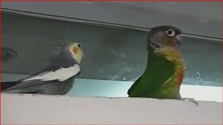Epic Birds Fails – Ultimate Funny Birds Compilation – NAUGHTY BIRDS CRAZY VIDEO