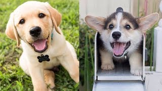 💗Aww Cute Dogs And Puppies Doing Funny Things Clean – Top 50 Funny Animals Vines | Puppies TV