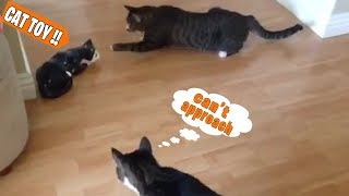 EPIC LAUGH Funniest Scared Cat Home 2018 Best of Funny cat Videos.#5