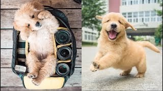 Cutest Dogs – ♥Cute Puppies Doing Funny Things 2019♥ #1