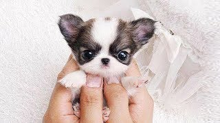 ♥Cute Dogs and Cats Compilation 2017♥ [HD] #57 – CUTE VN