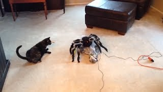 EPIC LAUGH Funniest Scared Cat Home 2018 Compilation  Funny cat Videos. #4
