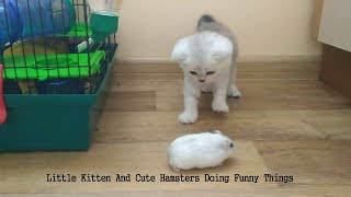 Little Kitten And Cute Hamsters Doing Funny Things