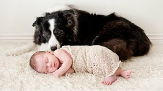 Dogs Babysitting Babies – A Dogs Love Babies Compilation || CUTE