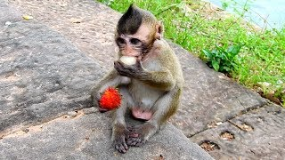 So Pity Baby Lola! Glad to see Cute princess Baby Monkey get fruits and Looking cute!