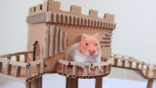 3 Hamsters Tracing Treasure In Castle Maze And Receiving Surprise Gift