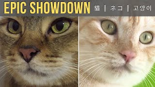 Cat Toy Competition – Super Cute Cats!