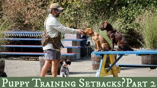 Five Tips for Dealing with Puppy Training Setbacks! Part 2