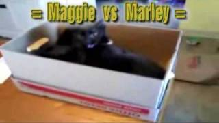 Funny and Cute Cats And Boxes Compilation