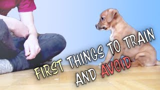 First things to train and to avoid – puppy dog training