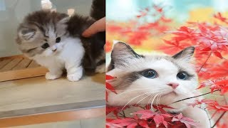 Top 10 cutest kittens in the world-Pet Animal Lovers-kitten meowing