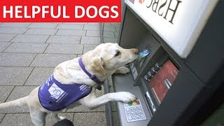 HELPFUL DOGS – Funny Dog Videos Compilation – Funny Dogs