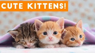 😍😃Funny Cute kittens,Cats and Dogs Life