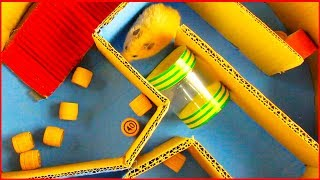 🐹 The secret life of my funny pet hamsters| Hamster in 5 Level Round Maze