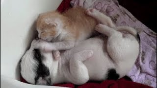 Adorable Kittens and Puppies Compilation